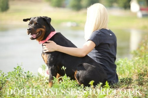 Rottweiler Dog Collar