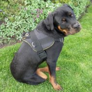 Best Rottweiler Harness with Padded Chest Plate for Training