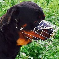 Rottweiler Wire Basket Muzzle Perfectly Ventilated for Daily Use