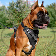 Protection Dog Harness for Agitation, Attack Boxer Training
