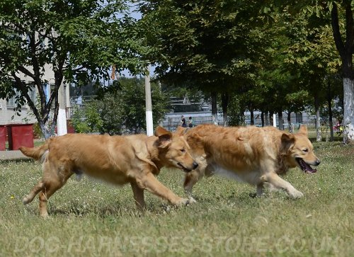 Search Dog Training and Games