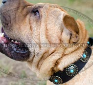 Shar-Pei Collar Leather with Blue Stones and Silver-Like Circles