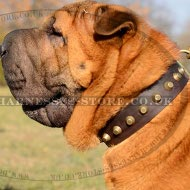 Shar-Pei Collar of Trendy Design, Leather with Row of Pyramids