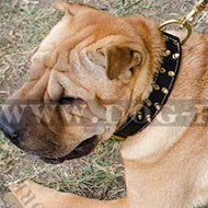 Shar-Pei Collar of Nappa Lined Wide Leather with Brass Spikes
