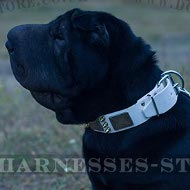 Shar-Pei Collar of White Leather with Spikes and Plates for Walk