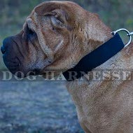 Shar-Pei Collar of Classic Style for Everyday Use, Two-Ply Nylon
