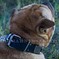 Shar-Pei Collar Leather with Nickel Plates and Cones in Vintage
