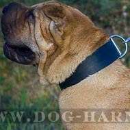 Shar-Pei Dog Collar of Extra Wide and Strong Leather, Classic