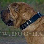 Shar-Pei Dog Collar of Trendy Design, Leather and Nickel Plates
