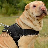 Shar-Pei Harness of Nylon for All-Weather and Multipurpose Use