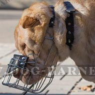 Shar-Pei Muzzle of Wire Cage for Daily Walking and Training