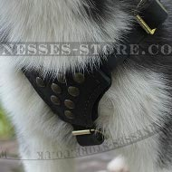 Siberian Husky Puppy Harness of Leather with Studs for Walking