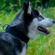 Dog Collar for Husky of Strong and Soft Felt Padded Leather