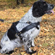 Spaniel Harness Leather Light-Weighted for Tracking and Training