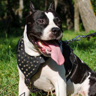 Studded Dog Harness for Staffy, Leather Working Stylish Gear