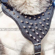 Spiked Dog Harness for Malamute, Walking