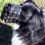 Stabyhoun Dog Breed Leather Muzzle Best for Everyday Use