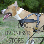 Dog Pulling Harness of Leather for Staffy Tracking and Training