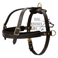Dog Harness Tracking UK Padded for Dogs, ❺ Quality!