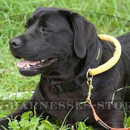 Tactical Dog Collar of Nylon with Handle & Quick Release Buckle