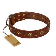 "Tan Leather Dog Collar with Studs ""Unfailing Charm"" FDT Artisan"