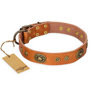 "Tan Leather Dog Collar Vintage Plates ""Dandy Pet"" FDT Artisan"