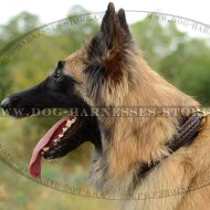 Tervuren Collar Leather Decorated with Braid, Elegant Design