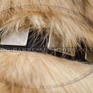 Tervuren Collar of Genuine Leather with Massive Nickel Plates