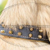 Tervuren Collar of Nappa Lined Leather with Shiny Brass Spikes