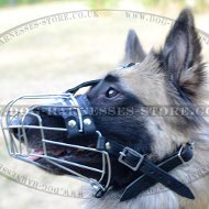 Tervuren Muzzle, Mesh Design, Quality Leather and