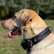 Thick Dog Collar with Braided Decorations and Brass Hardware