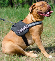 Dog Harness Use
