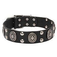 Vikings Dog Collar of Natural Leather with Oval Plates & Studs