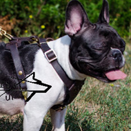 Walking Dog Harness of Soft Leather for French Bulldog, Small