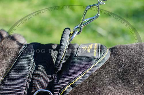 Nylon Dog Harness for Neapolitan Mastiff UK