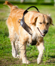 Walking Harness for Labrador, K9 Retriever Power Harness #1