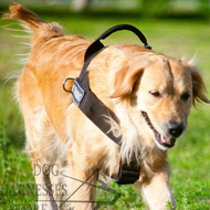 Walking Harness of Nylon for Labrador, K9 Retriever Training