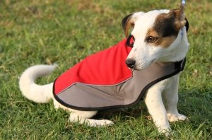Winter Dog Coats UK