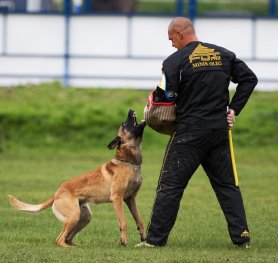 The Main Tips in Guard Dog Training
